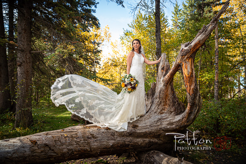 Calgary bride standing on fallen tree